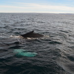 Amazing whale watching day with Marleen and Miriam